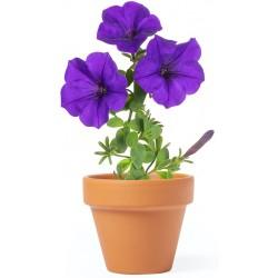 Maceta Para Plantar Petunias