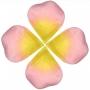 Pétalos de Rosa Artificiales Baratos
